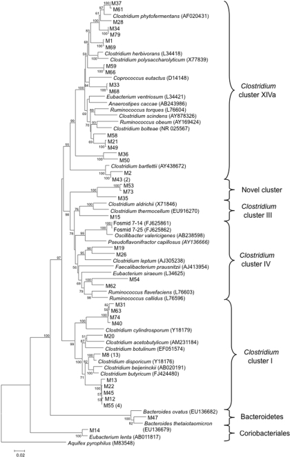 "Phylogenetic relationships of 16S rRNA gene sequences among the fosmids, clone library, and Clostridium clusters.Clone library sequences start with ""M."" The numbers in parentheses following some of the marine iguana sequences indicate the number of times that a particular sequence was obtained. Only representatives of the major Clostridium clusters, and limited representatives of the Bacteroidetes and Coriobacteriales, are shown. The tree was inferred using the neighbor joining approach. The numbers at the nodes represent bootstrap values. The bar represents 0.02 substitutions per nucleotide position. The outgroup is Aquifex pyrophilus."