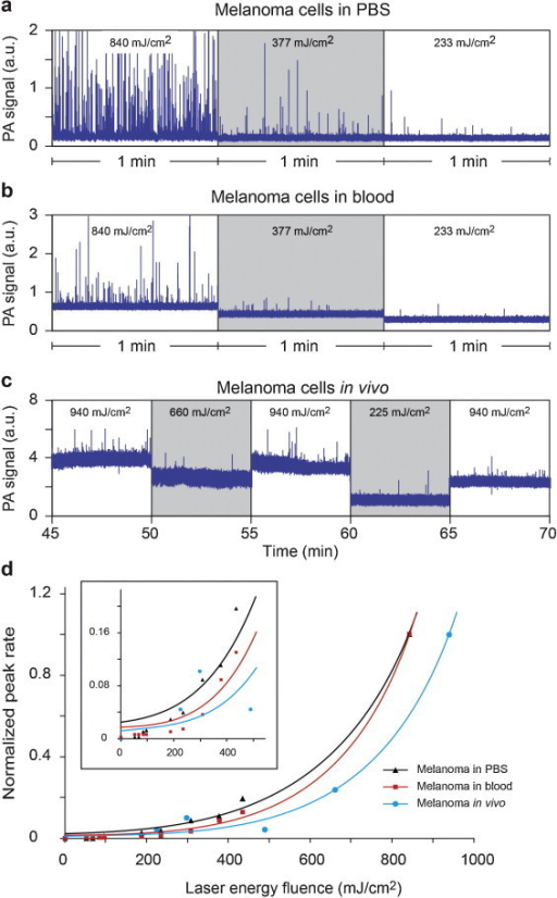 PA signal traces and rates of melanoma cells in flow at various laser energy fluences. (a) Cells in PBS and (b) mouse blood spiked with cells in artificial flow. (c) PA monitoring of a 50-μm vessel in mouse ear after injection of melanoma cells. (d) Peak rate in flow as function of laser energy fluence. Rates were normalized to the rate at the highest fluence applied. Averaging was 10.
