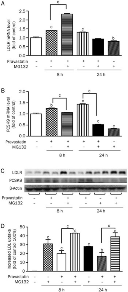 A combination of MG132 and pravastatin enhances LDLR while suppressing PCSK9 expression in HepG2 cells. Real-time PCR quantification (A, B) and Western blot analysis (C) of LDLR and PCSK9 expression levels and DiI-LDL uptake (D) in cells treated with MG132 (0.3 μmol/L), pravastatin (5 μmol/L), or both for the indicated times. The data are presented as the mean±SEM of three or more independent experiments. bP<0.05, cP<0.01 vs the vehicle-treated groups.