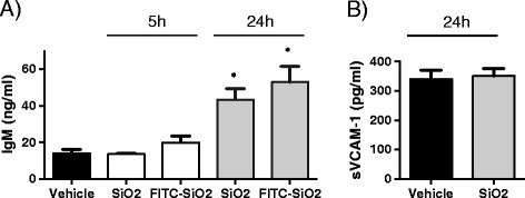 Effects of silica NPs in alveolar-capillary permeability. C57Bl/6j mice were instilled with 5 mg/kg (100 μg/mice) of SiO2 NPs, FITC- SiO2 NPs or vehicle. 5 h or 24 h later, mice were sacrificed and IgM (A) and sVCAM-1 (B) concentrations in BALs (2 ml) were measured by sandwich ELISA. Mean ± SEM is represented from 5 mice per group *p < 0.05 vs. Vehicle, Mann–Whitney test.