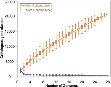 Pan and core genome analysis of 28Prevotellagenomes. The number of shared genes is plotted (violet) as a function of the number of Prevotella genomes sequentially considered. The continuous curve represents the calculated core genome size, exponential curve fit model (ycore = AcoreeBcore.x + Ccore) was applied to the data. The best fit was obtained with r2 = 0.949, Acore = 5490.32, Bcore = −1.05, and Ccore = 567.29. The extrapolated Prevotella core genome size is 567. The size of Prevotella pan-genome is plotted (orange) as a function of the number of Prevotella genomes sequentially considered. The continuous curve represents calculated pan-genome size, the power-law regression model (ypan = ApanxBpan + Cpan) was applied to the data. The best fit was obtained with r2 = 0.999, Apan = 2389.18, Bpan = 0.7, and Cpan = 66.29. The extrapolated Prevotella pan-genome size is 24685. The vertical bars correspond to standard deviations after repeating random combinations of the genomes.