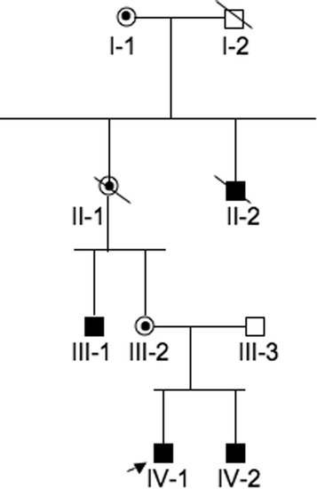 Pedigree of the affected Italian family. Squares and circles symbolize males and females, respectively. Unblackened and blackened symbols denote unaffected and affected individuals, respectively. Circles with a dot inside denote carrier females. Diagonal lines denote deceased individuals. The arrow denotes the proband.