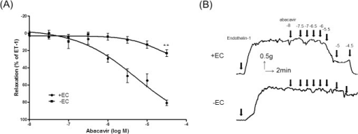 Effect of abacavir on the relaxation of rat basilar arteries.Abacavir-induced relaxation of rat basilar arteries was measured in the presence (+EC) or absence (–EC) of endothelial cells. (A) Changes in tension were expressed as the percentage decrease in response to contraction caused by endothelin-1 (ET-1; 1–10 nM). (B) Sample trace showing the effect of endothelium removal on abacavir-induced relaxation. Values are means ± S.E.M of six to eight sets of experiments and statistical comparisons were made using ANOVA. ** P<0.01 compared with control.