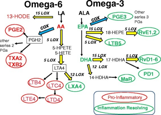 Metabolic Pathways For Omega 6 And Omega 3 Fatty Acids Open I