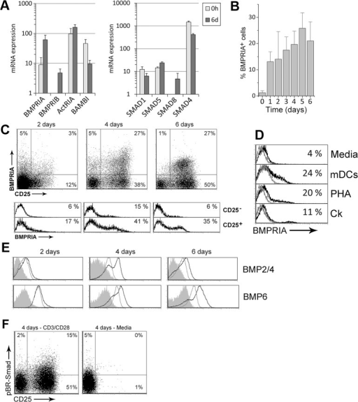 BMP signaling is activated by TCR stimulation in naive CD4+ T cells.Freshly isolated human peripheral blood naive CD4+ T cells were stimulated with anti-CD3/CD28 mAb. (A) Transcripts for several components of the canonical BMP signaling pathway were determined by real-time PCR ex vivo (0h) or after 6 days of stimulation (6d). GNB2L1 was used as endogenous control. Means ± SD of at least three independent experiments run in duplicates are shown. Note the logarithmic scale on y-axis. (B) Percentage of BMPRIA+ cells detected by flow cytometry throughout the culture. Bars represent the mean ± SD of two to five independent experiments. (C) Expression of BMPRIA and CD25 in T cells (upper dot plots) and differential expression of BMPRIA in the CD25- and CD25+ cell populations (lower histograms) during activation. A representative experiment out of four is shown. (D) Expression of BMPRIA in T cells cultured with different stimuli. Grey histograms represent isotype controls. Similar stainings were obtained in two to three independent experiments. mDCs: mature dendritic cells; PHA: Phytohaemagglutinin; Ck: cytokine cocktail (rhIL-2, rhIL-6, rhTNF-α) (E) Determination of BMP2/4 and BMP6 production by flow cytometry in T cells cultured in media alone (grey histograms) or in the presence of anti-CD3/CD28 mAb (black histograms). Grey filled histograms represent isotype control stainings. A representative experiment out of three is shown. (F) Expression of CD25 and phosphorylated BR-Smad (pBR-Smads) during activation. For comparison, T cells were kept in culture media alone. Results are representative of three independent experiments.