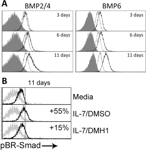Canonical BMP pathway and IL-7 signaling.(A) Expression of BMP2/4 and BMP6 was determined by flow cytometry at the indicated time points in T cells cultured in media alone (grey histograms) or in the presence of IL-7 (5 ng/ml) (black histograms). Grey filled histograms represent isotype control stainings. A representative experiment out of four is shown. (B) Differential expression of phosphorylated Smad-1/5/8 (pBR-Smad) analyzed by flow cytometry in naive CD4+ T cells after 11 days of culture in media alone or supplemented with IL-7 and DMSO or IL-7 and DMH1 (40 μM). Percentages represent the increment relative to cultures in media alone. One representative of three independent experiments is shown.