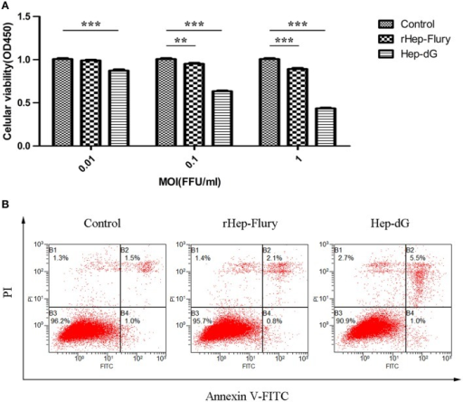 Higher apoptosis rates in Hep-dG-infected NA cells. (A) Effects of rabies viruses rHep-Flury and Hep-dG on cell viability. NA cells were infected with rHep-Flury and Hep-dG at various MOI of 0.01, 0.1, and 1. Cell viability was assessed with the cell counting kit-8. Absorbance at 450 nm was measured using a microplate reader. Data were mean ± SEM. n = 6. Differences (independent-samples t-Test) being **p < 0.01, and ***p < 0.001. (B) Cell apoptosis induced by rabies viruses Hep-dG and rHep-Flury. NA cells were infected with rHep-Flury and Hep-dG at a MOI of 0.01. Cell apoptosis was quantified by using Annexin V-FITC apoptosis kit. Samples were analyzed by flow cytometry. The lower right part (Annexin V+/PI-) was considered as early stage of apoptotic cells and top right part (Annexin V-/PI+) was considered as late stage of apoptotic cells. The lower left part (Annexin V-/PI-) was considered as viable cells and the upper left part (Annexin V-/PI+) was considered as necrotic cells.