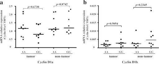 The effect of G870A genotype on the expression of cyclin D1 variants in HCC tissues. The expression of cyclin D1 variants in 17 genotyped HCC tissues was detected by real-time PCR. The expression of cyclin D1a (a) or D1b (b) in HCC tissues with AA genotype (n = 9) was compared to GG genotype (n = 8). The housekeeping gene CTBP1 was used to normalize the expression levels of cyclin D1a and cyclin D1b. Each sample was tested in triplicate in two separate experiments