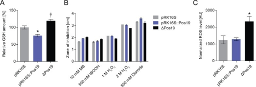 Pos19 influences GSH and ROS levels.(A) Measurement of total intracellular glutathione (GSH). GSH was measured using Ellmann's reagent (DTNB) in cell samples from three R. sphaeroides strains: an empty vector control (pRK16S), a strain with a constitutive, plasmid-borne over-expression of Pos19 under the control of the 16S rRNA promoter (pRK16S::Pos19), and the Pos19 mutant (ΔPos19). The relative GSH amount is depicted in percent; the GSH amount of the empty vector control (pRK16S) was set to 100 percent. All results represent the mean of nine independent biological experiments with technical duplicates. Error bars reflect the standard error of mean. The level of significance compared to the control (pRK16S) is indicated († 0.05 < p < 0.1 and * p < 0.05). (B) Inhibition zone assay using 10 mM methylene blue (MB) in the light, 500 mM tBOOH, 1 M and 2 M hydrogen peroxide (H2O2), and 500 mM diamide. The diameter of the zones of inhibition was measured for the three R. sphaeroides strains described above for the GSH assay. The data represent the mean of three independent experiments with technical duplicates. The error bars represent the standard error of mean. (C) Effect of Pos19 on ROS levels. Determination of intracellular levels of ROS in the control strain (pRK16S) compared to Pos19 over-expression (pRK16S::Pos19) and mutant (ΔPos19). ROS generated by the cells were analyzed after reaction with 10 μM 2,7-dihydrodichlorofluorescein diacetate. The fluorescence intensity was normalized to the optical densities of the samples. The resulting values are presented in arbitrary units (AU). The data represent the mean of three independent experiments. The error bars indicate the standard error of mean. The level of significance compared to the control (pRK16S) is indicated (* p < 0.05).