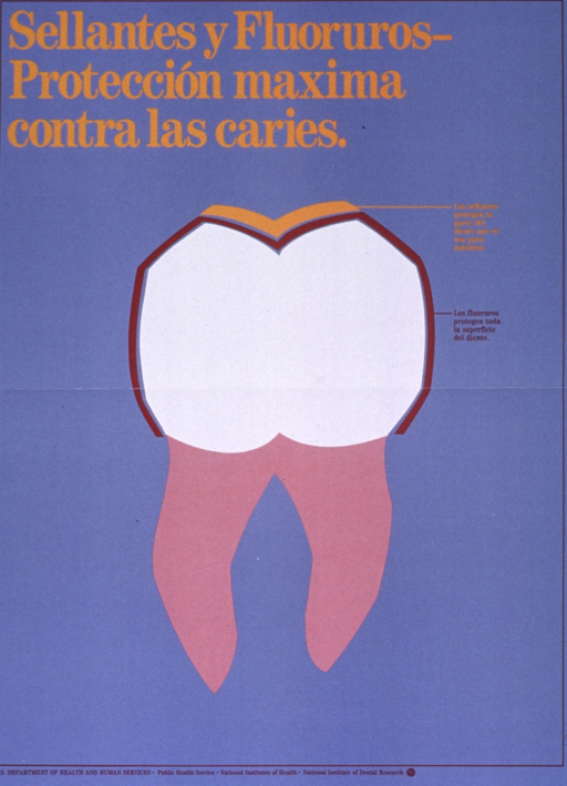 <p>Steel blue poster with gold and burgundy lettering.  Title at top of poster.  Visual image is an illustration of a tooth showing where fluorides and sealants work.  Caption, next to illustration, indicates that sealants protect the chewing surface of the tooth and fluorides protect the entire surface of the tooth.  Publisher information at bottom of poster.</p>
