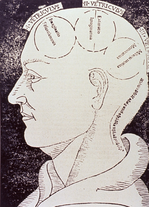 <p>Human head in left profile with three circles drawn and labeled indicating functions of those portions of the brain.</p>