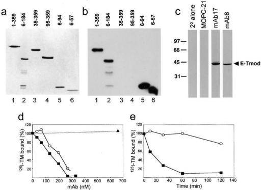 mAb17 and mAb8 specifically bind to the NH2-terminal Tmod1 residues 6–57, recognize Tmod1 in embryonic chick heart lysates, and disrupt its interaction with tropomyosin. (a) Coomassie blue–stained gel of full-length Tmod1 (lane 1,1–359) and Tmod1 fragments (lanes 2–6, residues 6–184, 35–359, 95–359, 6–94, and 6–5, respectively). (b) Western blots of samples in panel a were probed with mAb17 that recognized full-length (lane 1) and NH2-terminal Tmod1 (lanes 2, 5, and 6), but not COOH-terminal Tmod1 (lanes 3 and 4). (c) Western blots of embryonic heart extracts were probed with secondary antibodies alone (2° alone), MOPC-21, mAb17, or mAb8. mAb8 and mAb17 detected a band at ∼40 kD, corresponding to Tmod1. (d) Tmod1 nitrocellulose dots were preincubated with mAb8, mAb17, or mAb9, followed by incubation with 125I-tropomyosin (125I-TM). Preincubating the Tmod1 dots with increasing concentrations of mAb17 (closed squares) or mAb8 (open circles) resulted in a dramatic decrease in the percentage of tropomyosin that bound to Tmod1, as compared with mAb9 which did not disrupt the interaction (closed triangle). (e) Tmod1 dots were incubated with 125I-tropomyosin (125I-TM), followed by incubation with mAb8 (closed squares), or MOPC21 (open circles) for varying periods of time. Addition of mAb8 resulted in a significant dissociation of tropomyosin from Tmod1.