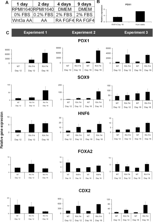 Gene expression analysis of gut endodermal markers at day 16 using the FGF4/RA differentiation protocol.(A) The FGF4/RA differentiation protocol. FBS = fetal bovine serum. Activin = Activin A 100 ng/mL, Wnt3a (25 ng/mL). (B) Relative mRNA expression of PDX1 in RA/FGF4-treated hESC (Day 16) and human islets (C) Relative mRNA expression of PDX1, FOXA2, HNF6, SOX9, and CDX2 at day 12 and 16 with or without (NT = no treatment) addition of RA and Fgf4 (F4) after AA-induction. In these experiments cell line Hues-3 (subclone 52) was used. In Experiment 1, NT day 16 is missing.