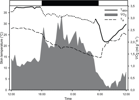 Metabolic rate and skin temperature of a sub adult female G.moholi including a torpor bout.Skin temperature (Tskin) started dropping below 30°C in the morning at 5:30am; Metabolic rate () started decreasing earlier at 4am. The female was torpid for about six hours. Grey area illustrates , black line shows Tskin, dotted line indicates the period of artificial variations in Tskin measurements due to movements of the animal, dashed line shows ambient temperature in the laboratory room (Ta); black bar indicates the dark phase, white bars indicate the daytime.
