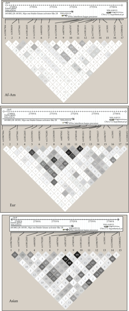 Haplotype diagrams showing LD structure between SNPs near the IFNK  gene in each ancestral background. Generated using Haploview 4.1 software, the plots show pairwise comparisons between each SNP in each ancestral background as r-squared values. Increased dark shading indicates higher r-squared values between the two SNPs. Eur. European ancestry, Af-Am. African-American ancestry.