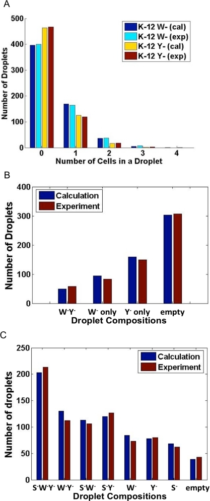 Comparisons between experiments and calculations for cell distribution in droplets.Calculations were based on the Poisson distribution. (A) Numbers of droplets carrying different numbers of cells. (B) Numbers of droplets carrying four different combinations of a two-strain system. (C) Numbers of droplets carrying eight different combinations of a three-strain system.