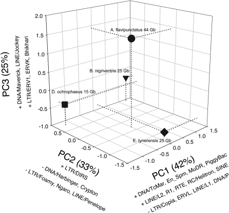 PCA results summarizing differences in TE landscape across four species. Phylogenetic relationships are (Batrachoseps nigriventris, Eurycea tynerensis), (Aneides flavipunctatus, Desmognathus ochrophaeus).