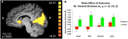 Main effect of outcome. (A) A 2 (outcome type: positive/negative) × 4 (condition) repeated measures whole brain ANOVA revealed a main effect of outcome in corticostriatal circuitry, including the right ventral caudate nucleus (x, y, z = 8, 19, 3). (B) Extracted mean parameter estimates from this ventral striatum cluster revealed increased BOLD responses to positive compared to negative outcomes, irrespective of condition.