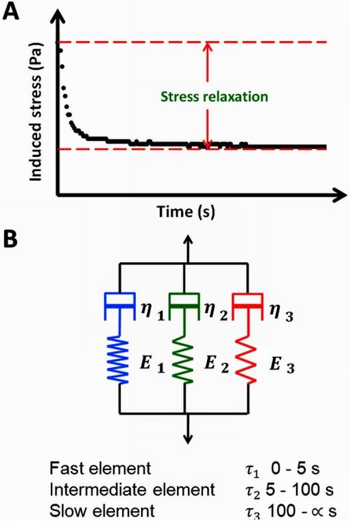 measurement and maxwell model of the viscoelasticity of open i rh openi nlm nih gov