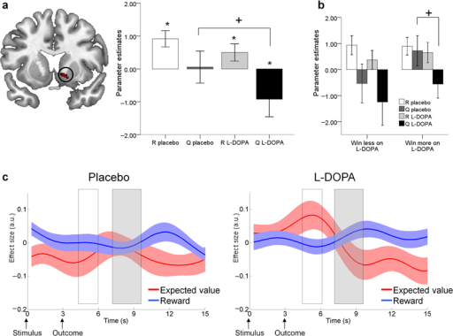 Reward prediction in the nucleus accumbens in 32 older adultsa: A region in the right nucleus accumbens showed greater BOLD activity for reward (R) than for expected value (Q) at the time of outcome ('putative' reward prediction error). However, the lack of a negative effect of Q under placebo meant this prediction error signal was incomplete (*one sample t-test p<0.05 one-tailed). L-DOPA increased the negative effect of Q (paired t-test, +p < 0.05 two-tailed) resulting in a 'canonical' prediction error signal (both a positive effect of R and negative effect of Q). Bars ±1 SEM.b: Participants who 'win more on L-DOPA' (n = 15) only demonstrated a negative effect of Q under L-DOPA and not placebo (+paired t-test p < 0.05 two-tailed). R and Q parameter estimates did not differ between L-DOPA and placebo for participants who 'win less on L-DOPA', n = 17. Bars ±1 SEM.c: Time course plots of the nucleus accumbens BOLD response to reward and expected value. White box corresponds with BOLD responses elicited at the time participants' made a choice; grey box corresponds with BOLD responses elicited when the outcomes were revealed. Under placebo the only reliable signal observed was a reward response. Under L-DOPA, a canonical reward prediction error was observed, involving a positive expectation of value at the time of the choice together with a positive reward response and a negative expectation of value at the time of the outcome. Reward anticipation (positive effect at the time of the choice) was only observed on L-DOPA. Solid lines are group means of the effect sizes, shaded areas represent ±1 SEM.