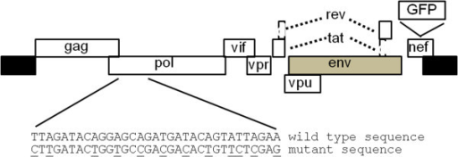 Schematic presentation of the NLR+GFP clone with wild type and mutated sequence in the pol gene. Shown are the HIV-1 reading frames. Black and gray rectangles represent the long terminal repeats (LTRs) and the out-of-frame env gene, respectively. GFP represents the GFP-expression cassette under the control of an internal CMV promoter. The mutated nucleotides are underlined. The indicated mutations do not change the amino acid sequence of the encoded protein.
