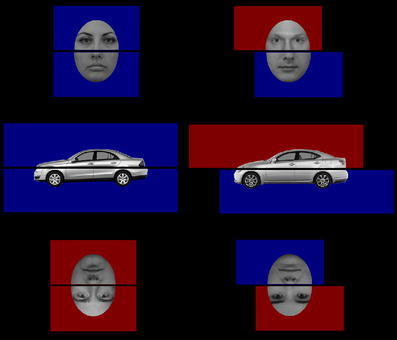 Example car, inverted face, and upright face stimuli from the grouped (left column) and ungrouped (right column) conditions