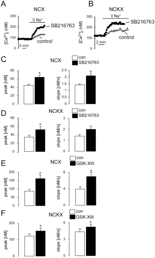 Effects of GSK3 inhibitors SB216763 or GSK-XIII on K+ independent (NCX) and K+ dependent (NCKX) Na+/Ca2+ exchanger activity in DCs.A,B. Representative original tracings showing [Ca2+]i in Fura-2/AM loaded gsk3WT without (control, open circles) or with (closed circles) SB216763 treatment (1 µM, 30 min) DCs prior to and following removal of external Na+ (0 Na+) at 0 mM K+ (A) and at 40 mM K+ (B). C,D. Arithmetic means ± SEM of the peak (left) and slope (right) values of [Ca2+]i increase following removal of external Na+ at 0 mM K+ (C, n = 24–51) and at 40 mM K+ (D, n = 43–46) in gsk3WT DCs, without (white bars) or with (black bars) SB216763 treatment (1 µM, 30 min). *(p<0.05), unpaired t-test. E,F. Arithmetic means ± SEM of the peak (left) and slope (right) values of [Ca2+]i increase following removal of external Na+ at 0 mM K+ (E, n = 47–82) and at 40 mM K+ (F, n = 43–46) in gsk3WT DCs without (white bars) or with (black bars) GSK-XIII treatment (10 µM, 30 min). *(p<0.05), unpaired t-test or Mann–Whitney U test.