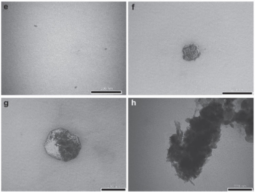 Bright field transmission electron microscope (TEM) images of nanoparticles and aggregates in homeopathically prepared gold (Aurum metallicum) at 30C (e) and 200C (f) potencies from Indian manufacturer SBL (originally Sharda Boiron Laboratories, Ltd, Delhi, India) and 30C (g) and 200C (h) potencies from the different Indian manufacturer WSI (Schwabe International GmbH, Germany, per Dr Willmar Schwabe India Pvt Ltd, Noida, Uttar Pradesh, India). Bulk form remedy source material was presumably diluted out of solution beyond the 12C potency. Reprinted with permission from Chikramane et al, 2010.68