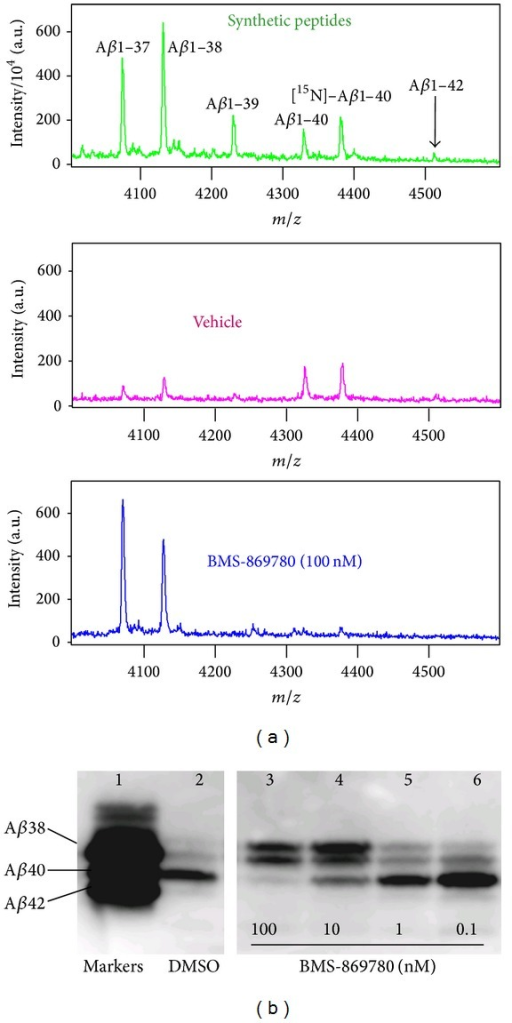 BMS-869780 increased the levels of the shorter peptides Aβ1-38 and Aβ1-37. (a) Top panel: an equimolar mix of synthetic peptides Aβ1-37, Aβ1-38, Aβ1-39, Aβ1-40, [15N]-Aβ1-40, and Aβ1-42 was evaluated by MALDI-TOF mass spectrometry. H4-APPsw cell cultures were treated with vehicle (0.1% DMSO—middle panel) or BMS-869780 (100 nM—bottom panel), [15N]-Aβ1-40 was added, and Aβ peptides were immunoprecipitated and evaluated by MALDI-TOF mass spectrometry. (b) H4-APPsw cell cultures were treated with BMS-869780 or DMSO vehicle. Aβ peptides were separated by gel electrophoresis in the presence of urea and detected by western blotting. Under these conditions, higher molecular weight Aβ peptides exhibit greater gel mobility. Lane 1: an equimolar mix of synthetic peptides Aβ1-38, Aβ1-40, and Aβ1-42. Lane 2: DMSO vehicle-treated cell culture. Lanes 3–6: Cell cultures treated with BMS-869780 at final concentrations of 100, 10, 1 and 0.1 nM, respectively.