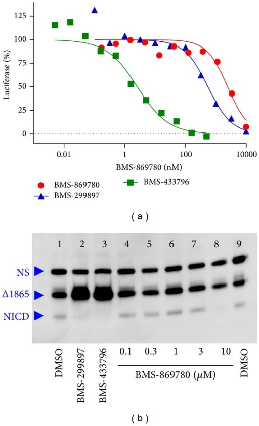 BMS-869780 did not inhibit Notch cleavage in vitro. (a) HeLa cell cultures were transfected with mNotchΔE and CBF1-luciferase reporter constructs, treated overnight with BMS-869780 (●), BMS-299897 (▲), or BMS-433796 (■), and luciferase assays were carried out. (b) HeLa cell cultures were transfected with mNotchΔ1865, treated with compounds overnight, and cell extracts were evaluated by western blot using anti-c-myc-HRP conjugate. Lanes 1 and 9: DMSO (0.1%) vehicle. Lane 2: BMS-299897 at 1 μM. Lane 3: BMS-433796 at 0.3 μM. Lanes 4–8: BMS-869780 at 0.1, 0.3, 1, 3, and 10 μM, respectively.