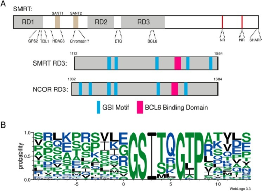 A repeated sequence motif within the class IIa HDAC binding region of SMRT/NCOR co-repressors.A, domain arrangement of SMRT indicating regions known to interact with partner proteins and schematic of RD3 of SMRT/NCoR showing the location of identified GSI repeats and the BCL6 binding domain with a similar arrangement and spacing. B, Weblogo plot of RD3 GSI motifs from SMRT and NCoR of 6 species demonstrates a well conserved 8 amino acid residue motif. NR, nuclear receptor binding region.