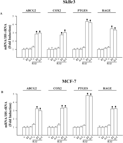 mRNA expression of ABCG2, COX2, PTGES and RAGE evaluated by real-time PCR in SkBr3 (A) and MCF-7 (B) cells treated for 8 h with vehicle (−), 10 nM E2, 100 nM G-1 and 10 ng/ml IL1β. Cells were also treated for 8 h with 10 nM E2 and 100 nM G-1 before the treatment for 8 h with 10 ng/ml IL1β, as indicated. Results obtained from three independent experiments performed in triplicate were normalized for 18S expression and shown as fold change of RNA expression respect to cells treated with vehicle. (◼) p < 0.05 for cells receiving treatments versus vehicle.