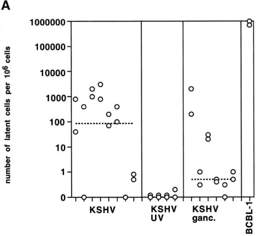 Analysis of transcript levels in infected implants. A and B show latent and lytic transcript levels expressed as the number of latent or lytic cells per 106 cells (logarithmic scale) for implants at day 14 after inoculation that were infected with KSHV (KSHV), infected with KSHV and treated with ganciclovir (KSHV ganc.), or infected with UV-inactivated virus (KSHV UV); BCBL-1 cells are shown as control. The median of each group is indicated by the dashed line. P values were calculated using the nonparametric Mann-Whitney test.