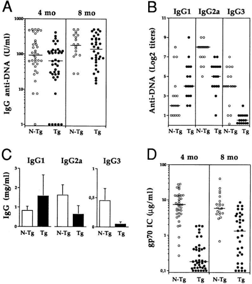 Effect of the IL-4 transgene expression on the spontaneous  autoantibody and IgG production in lupus-prone NZW × (pEP-IL-4 ×  B6.Yaa) mice. (A) Levels of serum IgG anti–DNA antibodies in IL-4  transgenic (Tg) and nontransgenic (N-Tg) male mice 4 and 8 mo-old. Results are expressed in U/ml by reference to a standard curve obtained with  a serum pool of 3–4-mo-old MRL-lpr/lpr mice. (B) IgG1, IgG2a, and  IgG3 subclass distribution of anti–DNA antibodies in the sera of 6-mo-old  IL-4 transgenic and nontransgenic male mice. Twofold serum dilutions  were tested starting with 1:100 dilution. The titers are the highest dilutions still giving a positive signal in the ELISA. (C) Serum levels of IgG1,  IgG2a, and IgG3 subclasses in 4-mo-old IL-4 transgenic and nontransgenic male mice. Ig concentrations are expressed in mg/ml. The means of  16 mice (± 1 SD) are represented. (D) Serum levels of gp70 IC in IL-4  transgenic and nontransgenic male mice 4 and 8 mo old. Results are expressed in μg/ml. Each symbol represents the value from individual animals. The median values are indicated as horizontal lines.