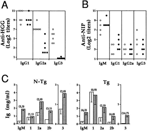 Effect of the IL-4 transgene on antigen-specific and nonspecific antibody production during T cell–dependent and T cell–independent antibody responses in NZW × (pEP-IL-4 × B6.Yaa) mice. IgM and  IgG subclass distribution of anti–HGG (A) and anti–NIP (B) specific antibodies in 3–5-mo-old IL-4 transgenic (closed circle) and nontransgenic  (open circle) male mice 10 d after immunization with T cell–dependent antigen HGG, or T cell–independent antigen NIP-Ficoll. IgG anti–HGG  antibodies were undetectable in sera from both transgenic and nontransgenic mice before immunization. While IgG anti–NIP antibodies were  undetectable, sera from both groups of mice before immunization exhibited significant and comparable titers of IgM anti–NIP antibodies (detectable at a serum dilution of 1:800), and their levels increased ∼eightfold after immunization. Each symbol represents the value from one individual.  (C) LPS-induced polyclonal IgM and IgG subclass responses in 6-mo-old  IL-4 transgenic (right) and nontransgenic mice (left). IgM and IgG subclass  levels determined 8 and 15 d, respectively, after the LPS injection (filled  column), were compared with those before the injection (open column).  The number in parentheses indicates the fold-increase of each Ig isotype  after the LPS injection. The means of five mice (± 1 SD) are shown.