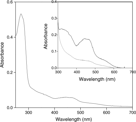 UV–visible spectrum of purified 3-hydroxycyclohexanone dehydrogenase (MhyADH). The spectrum of the oxidized enzyme (2.4 μM) was recorded in 20 mM Tris–HCl, pH 7.8. The inset shows the spectra of oxidized (solid line) and reduced enzyme (dotted line). The reduction of the enzyme was performed by addition of 1 mM 3-hydroxycyclohexanone