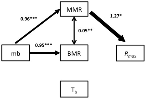 Schematic of thermogenic capacity model (model VI), the best fitting model.The parameter estimated for each path and their associated probability are indicated above arrows (*** = P<0.001 with ML, ** = P<0.05 with ML, * = distinct from 0 based on bootstrap). The arrows' thickness is proportional to the estimated path's coefficient. mb = body mass, BMR = basal metabolic rate, MMR = maximum metabolic rate, Rmax = intrinsic population growth rate; Tb = body temperature.