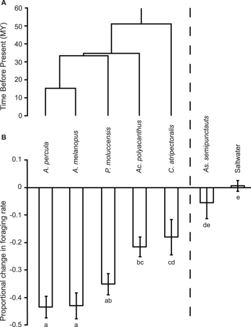 The phylogeny of Pomacentridae study species and antipredator response to heterospecific alarm cues.The phylogenetic relationship and antipredator response of Amphiprion percula, to heterospecific family members (Amphiprion melanopus ¸ Pomacentrus moluccensis, Acanthochromis polyacanthus and Chromis atripectoralis), a distantly related sympatric prey guild member (Asterropteryx semipunctatus) or a saltwater control. a) A chronogram (modified from [45]) displaying the divergence times of the MRCA of the focal species, A. percula to each of the heterospecific donor lineages within the family Pomacentridae. Ages are calibrated to millions of years before present. b) The mean change in foraging rate (±SE) of juvenile A. percula exposed to the chemical alarm cues of five heterospecific species and a saltwater control. Fishes are ordered with respect to their relatedness to A. percula. Letters below bars indicate Tukey's groupings.