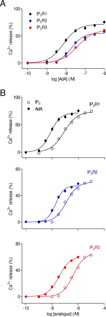 AdA is a potent agonist of all three IP3 receptor subtypes.(A) Concentration-dependent effects of AdA on Ca2+ release from the intracellular stores of cells expressing IP3R1, IP3R2 or IP3R3. All results are expressed as percentages of the Ca2+ release evoked by ionomycin. The same colour codes are used in all subsequent figures. (B) Comparison, for each IP3R subtype, of the Ca2+ release evoked by IP3 and AdA. Results are means ± SEM from the number of independent experiments given in Table 1. Here, and in many subsequent figures, some error bars are smaller than the symbols.