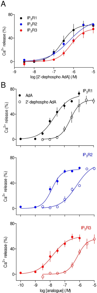 The 2′-phosphate of AdA is not the primary cause of its increased potency.(A) Effects of 2′-dephospho AdA on Ca2+ release via each IP3R subtype. (B) The same analogue compared with AdA. Results are means ± S.E.M. from 3–4 independent experiments.