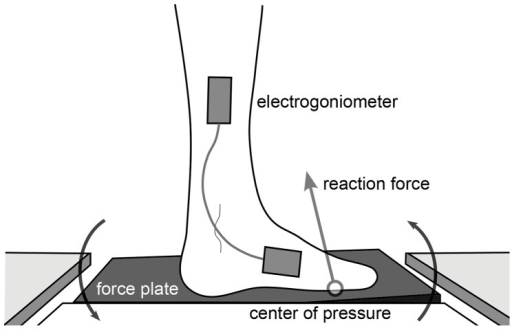 Diagram of robotic force plate dorsiflexing the stance foot.The platform's center of rotation coincides with the ankle joint. The center of pressure (COP) is a candidate phase variable that can be measured by the force plate of the perturbation mechanism.