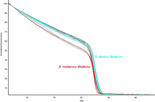 Melt curves of one HRM assay with titrations of target and non target DNA. The results of a titration range of 1 ng-100 fg genomic DNA from B. melitensis 16 M (red) and B. abortus 544 (blue) using the B. melitensis HRM assay and the HRM melt curves directly. Curves move from right to left with decreasing DNA concentration. As shown, the curves generated by very low concentrations of B. abortus DNA are very close to the curves generated by high concentrations of B. melitensis DNA and could be misidentified through this association.