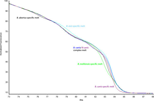 Melt curve kinetics for quintuplex target species. Melt profiles illustrating the unique HRM curves generated by the quintuplex for B. abortus (black), B. melitensis (green), B. ovis (light blue), B. suis (dark blue) and B. canis (purple). Each region of differentiation is highlighted.