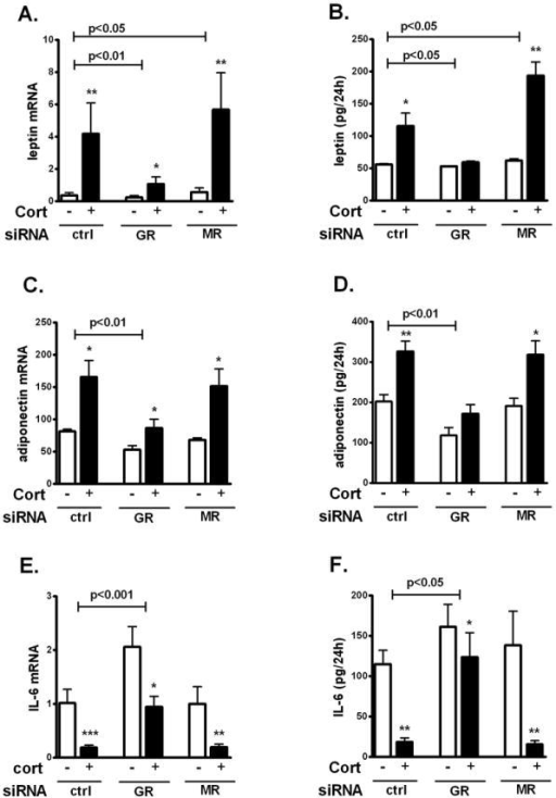 GR mediated cortisol-regulation of adipokine production in differentiated human adipocytesGR or MR silenced human adipocytes were starved for GCs overnight and treated with 200 nM cortisol for 24h. (A) Leptin mRNA. (B) Leptin secretion. (C) Adiponectin mRNA. (D) Adiponection secretion. (E) IL-6 mRNA. (F) IL-6 secretion. Interaction GR or MR siRNA and cortisol by 2 way-ANOVA, p<0.05, p<0.01, p<0.001 for the n=4-5. Effects of cortisol treatment vs. control: *, p<0.05, **, p<0.01 by paired T test.