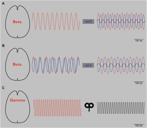 (A) Schematic: tACS in Parkinson's disease (PD). Abnormal beta oscillations (red line, left and right) are related to rigidity and bradykinesia. Application of tACS with a phase lag of 180° (blue line, right) leads to a reduction of these pathological oscillations (black line, right) by phase cancellation (right). As a result, rigidity and bradykinesia are reduced. Please note that to date phase cancellation has been thought to be able to reduce tremor in PD by affecting tremor related cortical frequencies. To our knowledge, beta frequency has not yet been targeted by NIBS using the phase cancellation concept. (B) Schematic: tACS in PD using online readout techniques. Since it has been reported that during tACS application tremor frequency changed in patients with PD, more online readout techniques should be developed to adjust NIBS applications. After application of 20 Hz tACS (see panel A), pathological beta rhythm changes its frequency to 15 Hz (red line, left). tACS of 20 Hz with 180° phase lag (blue line, left) looses its effect (black line, left). After online adjustment, tACS shifts to 15 Hz (blue line, right). Pathological beta (red line, right) is again reduced (black line, right). (C) Schematic: rTMS in schizophrenia (SCZ). By modulating oscillators of abnormal gamma-band activity (red line, left), amplitude is reduced (black line, right) and related behavioral impairments are reduced.