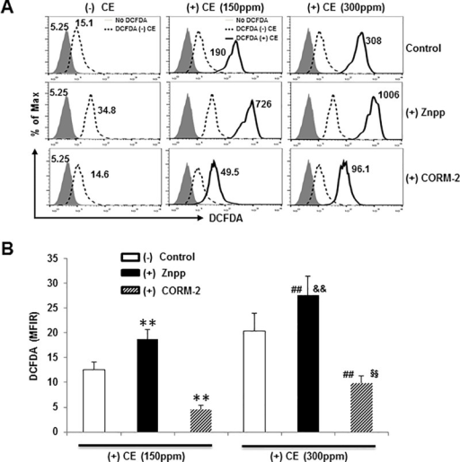 Both HO-1 and CORM-2 protect against CE-induced ROS production.(A) BREA-2B cells pretreated with 10 μM ZnPP or 10 μM CORM-2 were either unlabeled or labeled with 20 μM DCFDA for 30 minutes and then cultured for an additional 3 hours with or without 150 ppm or 300 ppm CE according to the protocol. Cells were then analyzed on flow cytometry. The mean fluorescence intensity (MFI) of DCFDA expression by no DCFDA (gray-filled histogram), with DCFDA no CE (Dashed line histogram) or with DCFDA and with CE treatment (Solid line histogram) were compared and shown in the histogram. Data shown are representative of three experiments. (B) For comparison, the MFI ratio (MFIR) was calculated by dividing the MFI of (+) CE treatments (solid line) by the MFI of the (-) CE with DCFDA (dashed line), respectively. The MFIR of DCFDA staining is shown as mean ± SD of 3 donors. ** p < 0.01 vs control (+) CE 150 ppm; ## p < 0.01 vs control (+) CE 300; && p < 0.01 vs (+) CE 150 ppm in the presence of ZnPP; §§ p < 0.01 vs (+) CE 150 ppm in the presence of CORM-2 by a one-way ANOVA with HSD test.