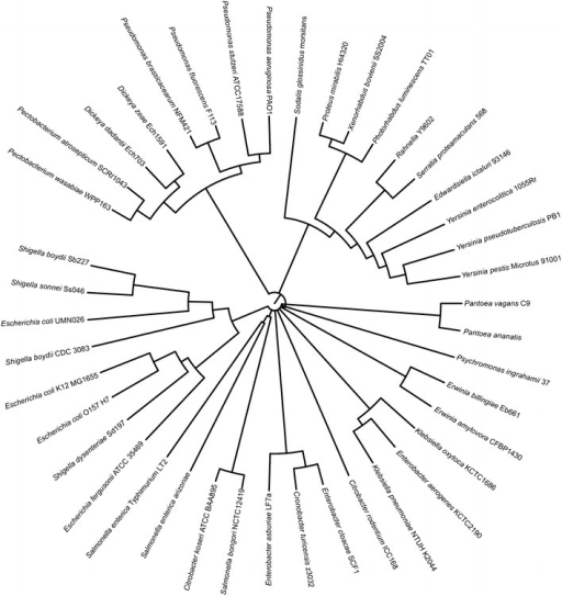 Maximum likelihood tree shows phylogenetic relationships amongst PanM homologues.