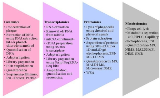 Different techniques to gain an insight into virosphere. Genomics includes concentration of phages, DNA isolation, quantification, and sequencing. Transcriptomics includes processing of RNA converting it to cDNA and sequencing. Proteomics encompasses protein extraction, separation and quantification using several tools like sodium dodecyl sulfate-polyacrylamide gel electrophoresis (SDS-PAGE), electron spray ionization—mass spectroscopy (ESI-MS), liquid chromatography–mass spectrometry (LC-MS), matrix-assisted laser ionization and deionization (MALDI)-MS and nuclear magnetic resonance (NMR), and Whole phage shotgun analysis (WSA). Metabolomics refers to metabolite extraction separation and quantification in a given time and different metabolites can be analysis using different tools like nanostructure initiator MS (NIMS) and desorption electron spray ionization (DESI) for the understanding of bacteriophage and its interactions.