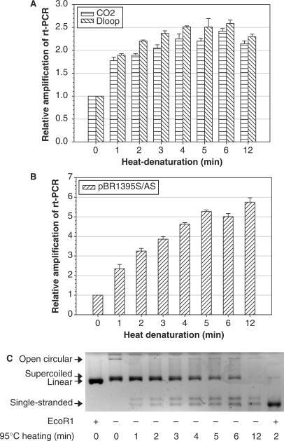 Effects of heat-denaturation of mtDNA on real-time PCR quantification. (A) Aliquots of 5 ng/µl of total genomic DNA isolated from LNCaP cells were heat-denatured at 95°C for different time periods and then used for real-time PCR amplification using two mtDNA markers and β-actin DNA marker. (B) Aliquots of 100 pg/µl of supercoiled pBR322 DNA were heat-denatured at 95°C and then analyzed using plasmid DNA marker pBR1395. The relative amplification of both mtDNA and plasmid DNA markers from heat-denatured templates was expressed as 2ΔCt, where ΔCt was Ctcontrol–Ctheated. (C) Electrophoresis of heat-denatured plasmid DNA in 1% agarose gel. Data from duplicate treatments were pooled. Differences between untreated and treated samples were all significant (P < 0.01).