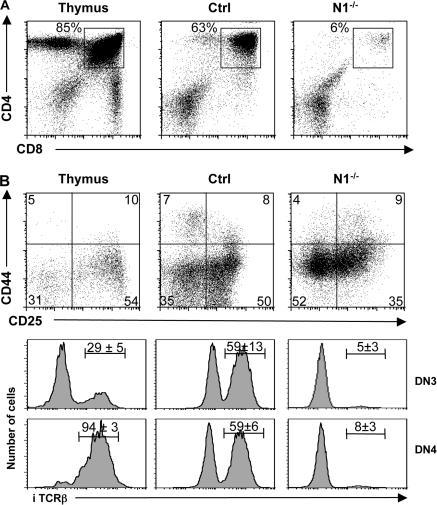 N2 cannot compensate for the loss of N1 function during T cell maturation in vitro. (A) KLS cells from Ctrl and induced N1−/− mice were sorted and cultured on OP-DL1 cells for 20 d. A representative flow cytometric analysis of CD4 versus CD8 of WT thymocytes, and Ctrl and N1−/− KLS cells cultured on OP9-DL1 are shown. (B) Indicated cells were electronically gated on lineage-negative DN thymocytes and analyzed for the expression of CD44 and CD25. Representative histograms for intracellular TCRβ (iTCRβ) expression on DN3 and DN4 thymocytes derived from Ctrl and N1−/− KLS cells 20 d after culture on OP9-DL1 are shown. The numbers above the bars indicate the percentage ± SD of iTCRβ+ cells (n = 4 for WT thymocytes and in vitro culture experiments).